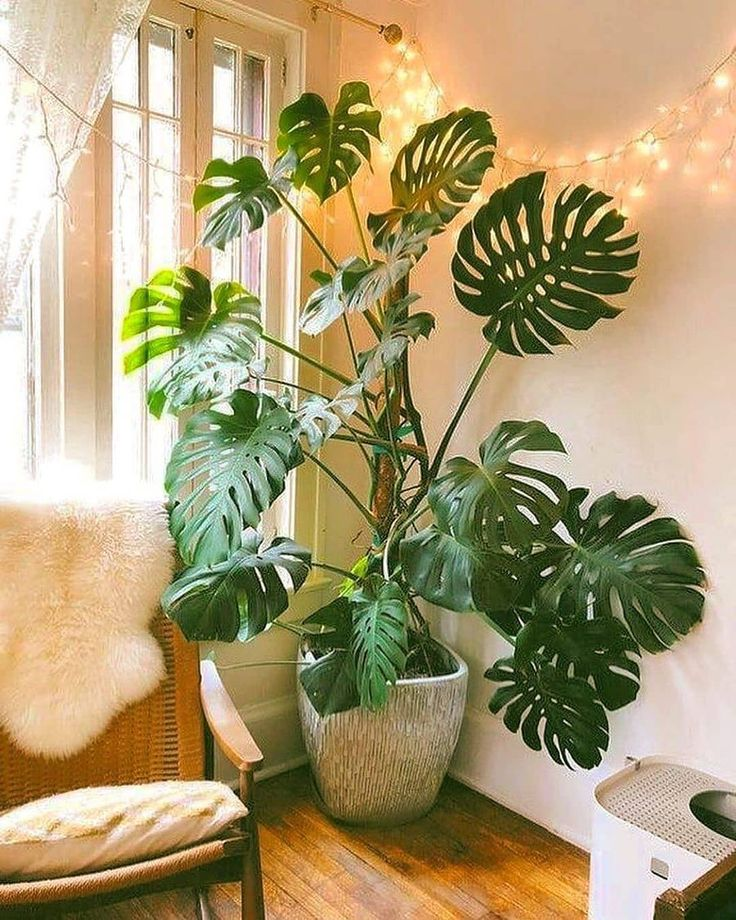 75 Smartest Way House Plants Decor Indoor Ideas The idea of having a beautiful, elaborate and impressive garden for your home is the dream of many. It is possible to have a really grand, elaborate a. Room With Plants, House Plants Decor, Plant Decor, Bedroom Plants Decor, Big Plants, 1960s Home Decor, Decoration Plante, Plant Aesthetic, Interior Plants