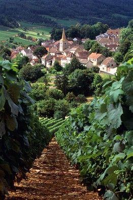 Pernand-Vergelesses, Burgundy, France