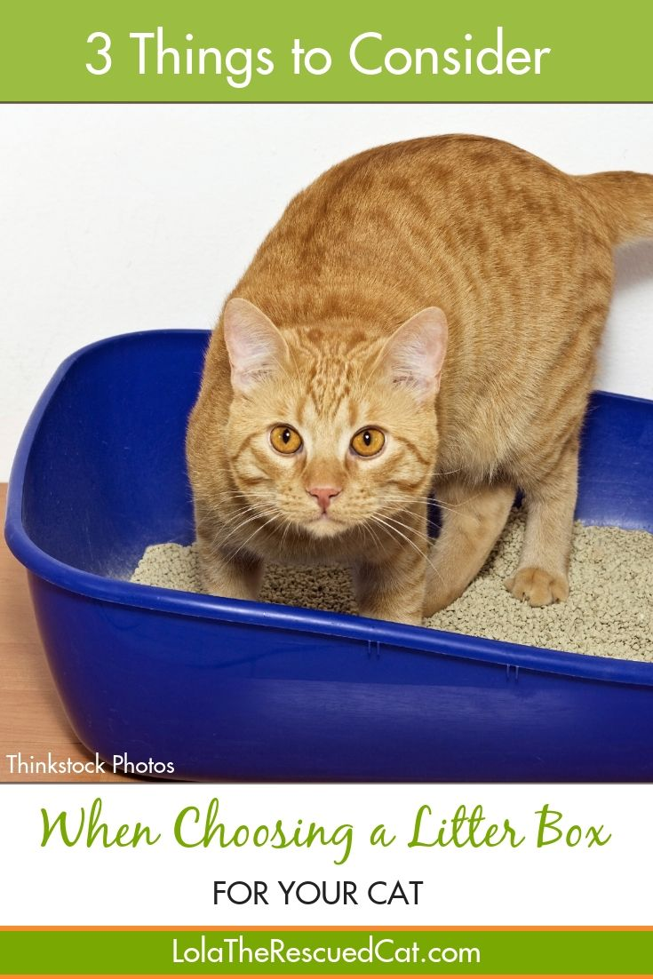 Three Things To Consider When Choosing A Litterbox Cat Training Litter Box Cat Training Litter Box