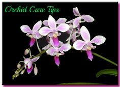 Orchid Care Tips From rePotme Orchid Supplies!