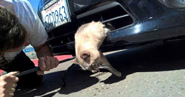 Gato sobrevive após ser atropelado e ficar preso em carro nos EUA