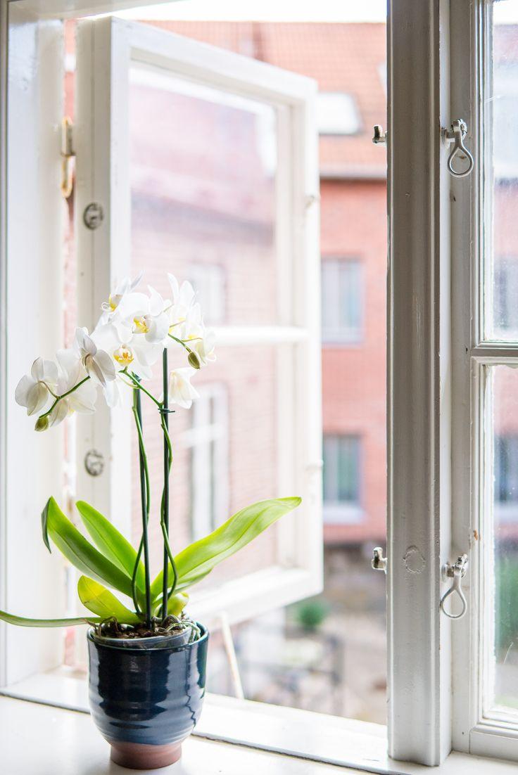 Charmiga fönster med utsikt mot pittoresk innergård!