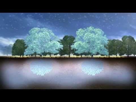 Klimaforandringer og skov