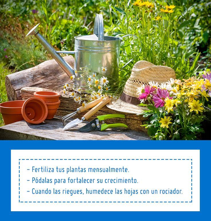 El sol est ideal para aprovechar tu jard n al m ximo - Jardines sencillos ...