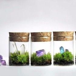 苔のミニミニテラリウム*鉱物と苔