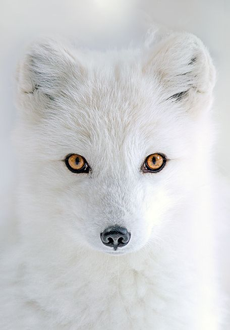 Arctic Eyes by Hisham Atallah                                                                                                                                                                                 More