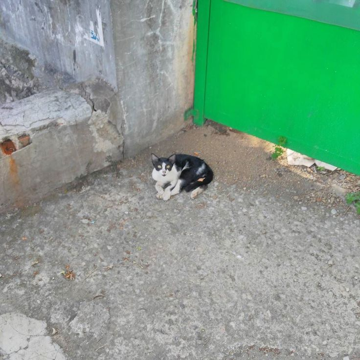 A cat I photo'ed otw to my office this morning.