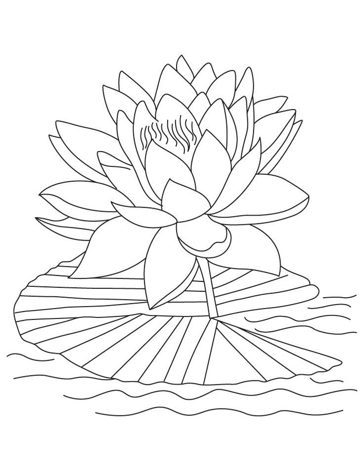 Printable Lotus Coloring Pages Flower Coloring Pages
