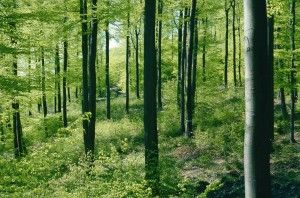 Wer Holz und Holzprodukte kauft, tut aktiv etwas für den Klimaschutz: Die Wälder der Erde filtern das Treibhausgas Kohlendioxid (CO2) aus der Luft, das zur Erderwärmung führt und speichern es in Form von Kohlenstoff.