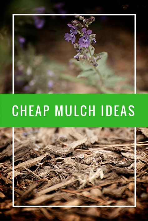 Cheap mulch ideas