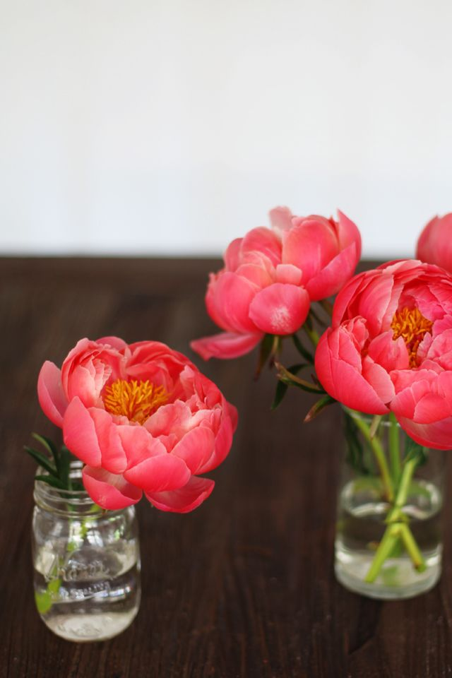 tiny vases with large blooms