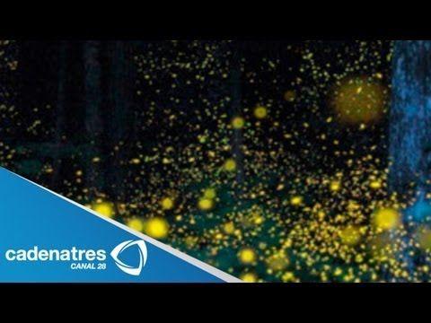 ▶ Santuario de luciérnagas de Tlaxcala ofrece un espectáculo durante ele verano - YouTube