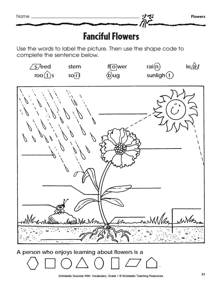 Parts Of A Plant Th besides B E D C Ac B Dcd B as well F Ba E Cc D Fc Ab F moreover How To Care For Fly Traps With Pictures   Trap Diagram Color Page Kids Labeled Parts Of A Flower Nephron Easy moreover Fda Ae D Da De E Ad Be Dcc. on fanciful flowers activity page flower labeling