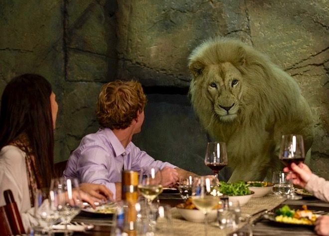 Remember the Judith Kerr book The Tiger Who Came to Tea? Well what about taking your kids to have tea with a white lion? Or canapés with a snow leopard? Or ice cream with a hyena? Now you can at Jamala Wildlife Lodge, the amazing safari sleepover lodge in Canberra, Australia. Read about it at http://www.suitcasesandstrollers.com/articles/view/family-friendly-accommodation-jamala-wildlife-lodge-canberra?l=all #suitcasesandstrollers #travel #travelwithkids #familytravel #familytraveltips