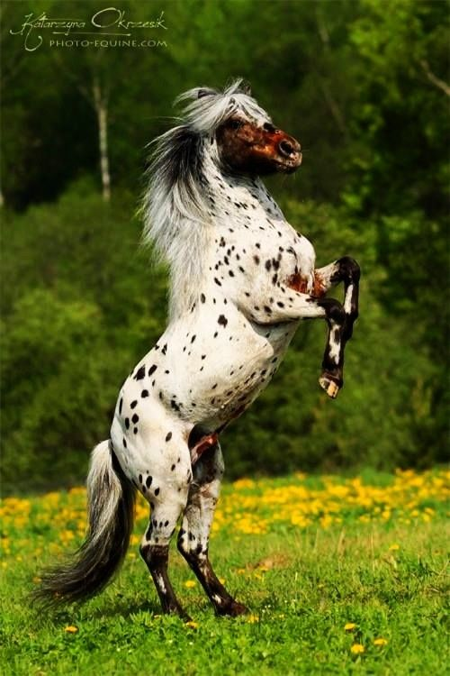 Anyone know what type of horse this is??? Plz comment!