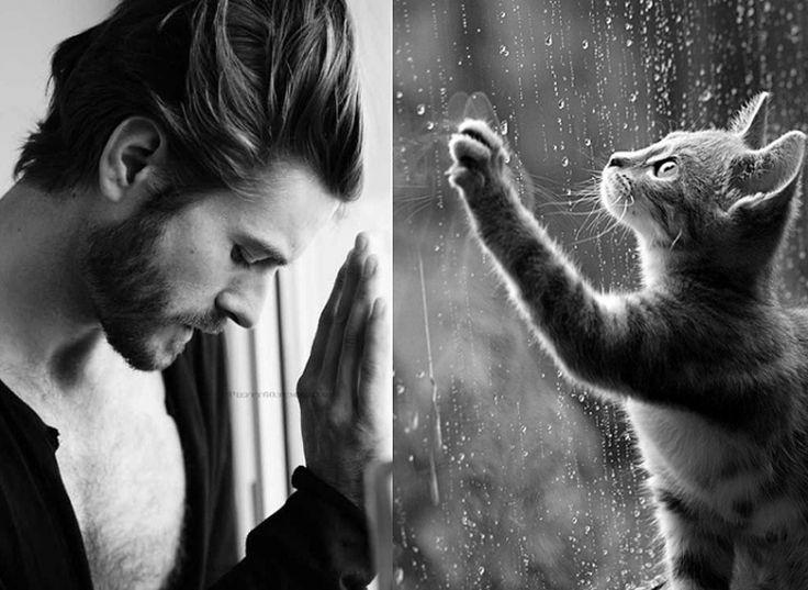 Человек и кошки смешные картинки, папоротником