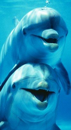 Research reveals dolphins have extraordinary intellects and emotional IQs greater than ours.  And...what research doesn't tell us is that they hold a considerable vibration for the planet that projects love and tranquility-an energy frequency that our earth needs from mammals. Thank you beautiful dolphins!!  ~//