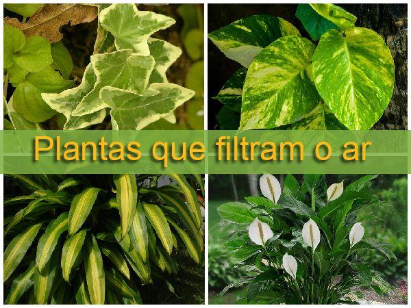 Plantas que filtram o ar em ambientes internos