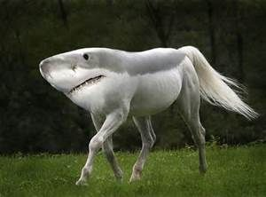 its awesome horse but it will eat you