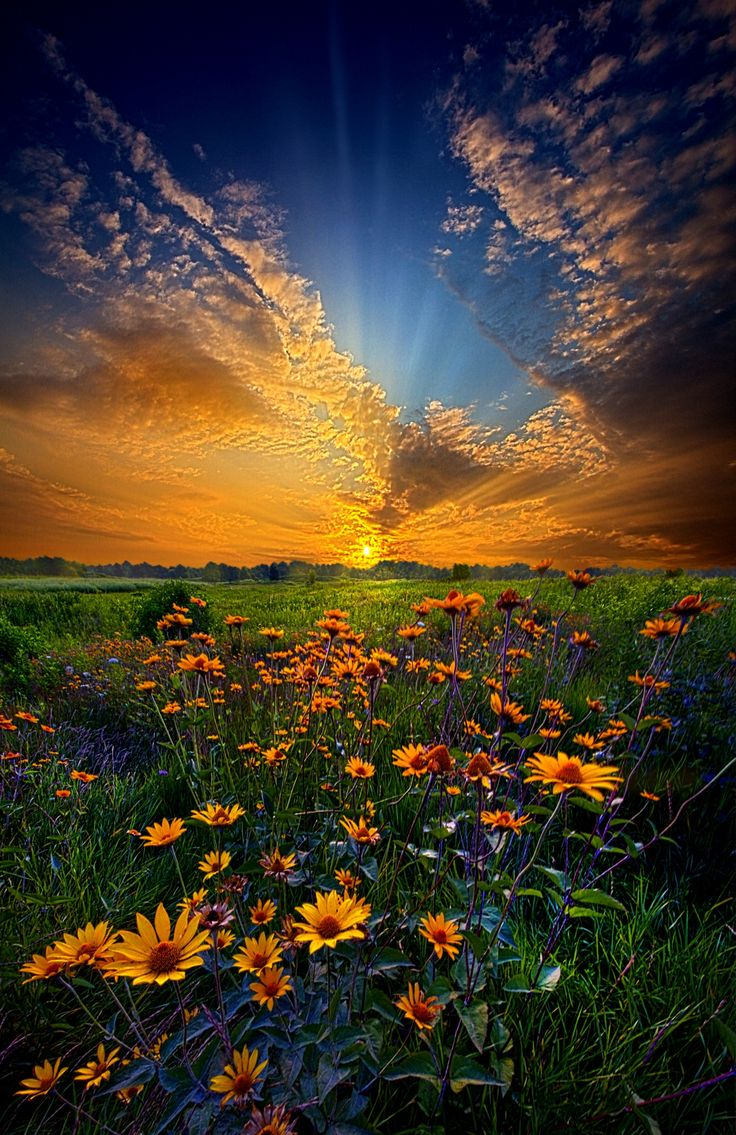 """Fantastic landscape photograph of a field of daisies at sunrise in Wisconsin, entitled """"Daisy Dream"""" by Phil Koch on 500px. Captured with a Canon EOS 7D, Focal Length 10mm, Shutter Speed 1/13s, Aperture f/18, ISO/Film 320."""