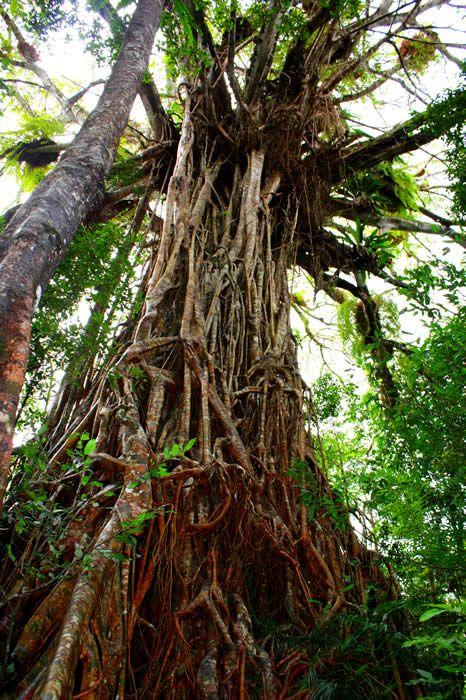 Lamington National Park, Queensland.
