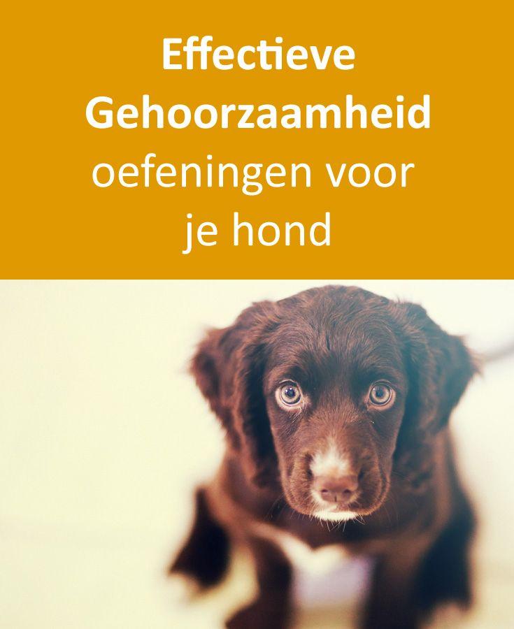 Leuke en Effectieve oefeningen om je hond beter te laten gehoorzamen. Fijn voor hond en baas: https://www.dehondenwereld.nl/gehoorzaamheidstraining-oefeningen-hond/