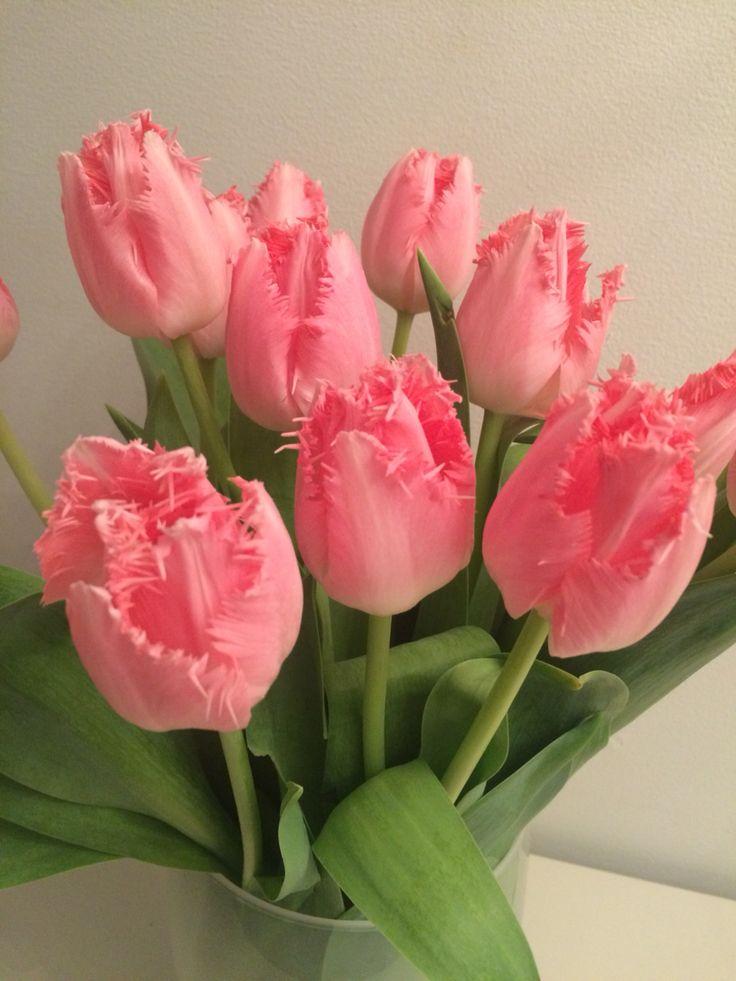 "Interiør-tulipaner ""Carcharel"""
