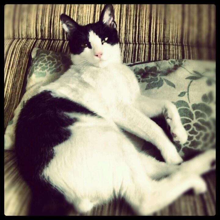 >.< Gary the cat