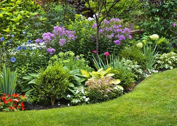 curved-herbaceous-border-with-evergreens-and-perennials