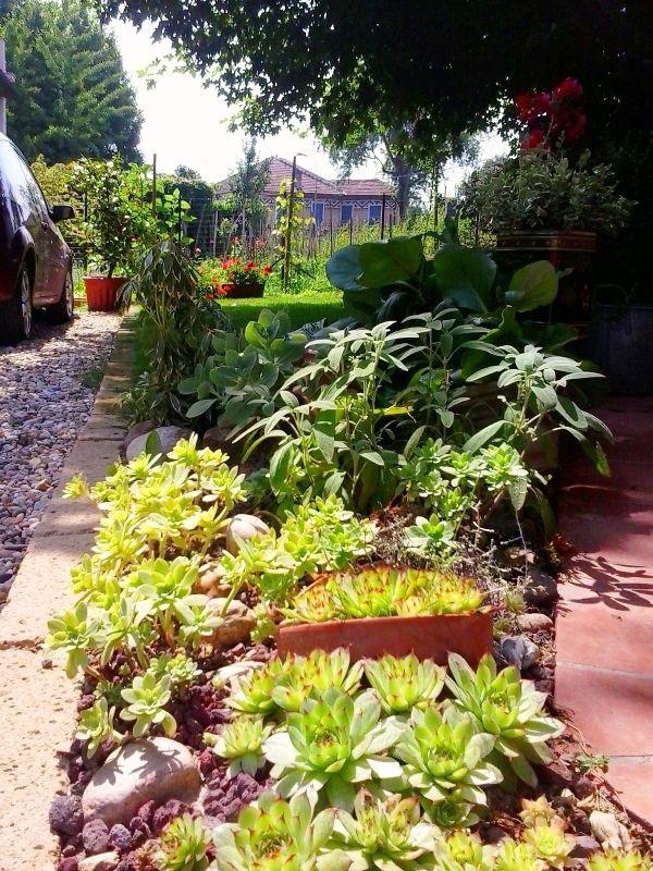 Oltre 25 fantastiche idee su giardino di piante grasse su - Giardino roccioso piante ...