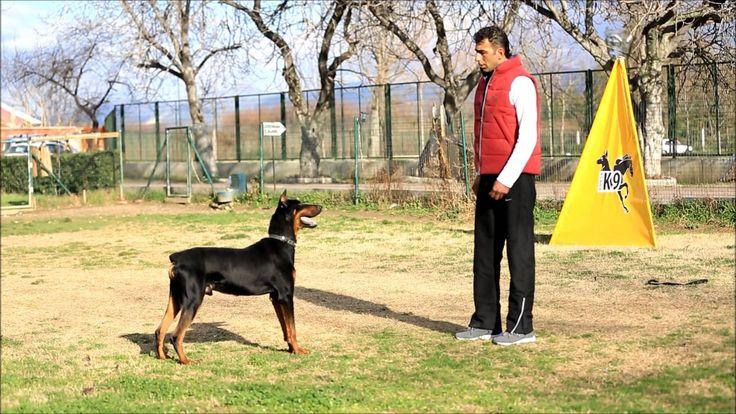 Profesyonel Köpek Eğitimi 7 -- Club K9 --