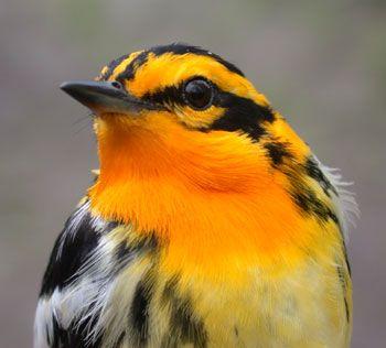 Google Image Result for http://4.bp.blogspot.com/_De9iTSkIo8I/TSXFcLVImlI/AAAAAAAAAP4/HkwEbT00uoM/s1600/colorful_Beautiful_cute_birds+%252814%2529.jpg