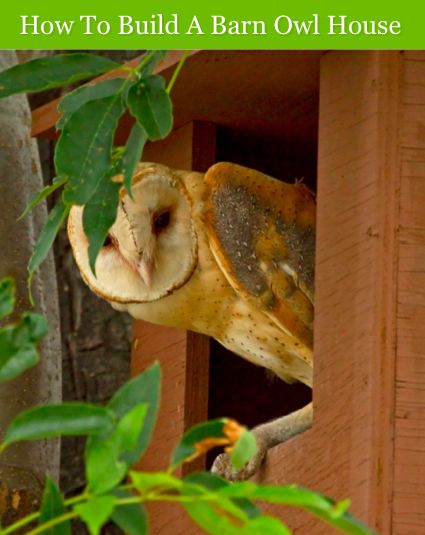 How To Build A Barn Owl House...http://homestead-and-survival.com/how-to-build-a-barn-owl-house/