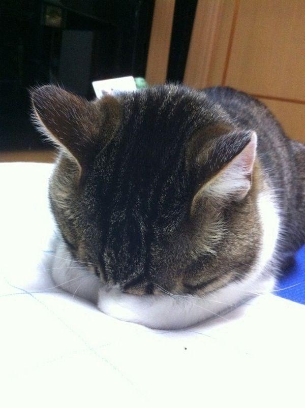 Such a sleepyhead