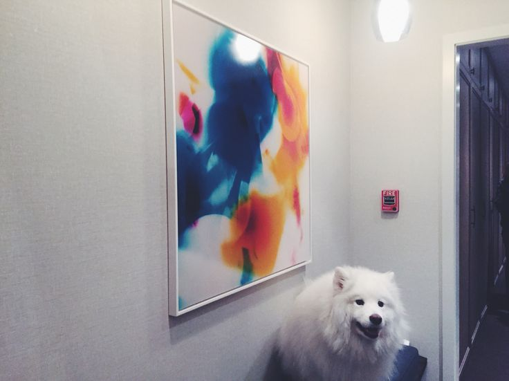"""""""258a"""" by #artist Blake Lewis. This 40""""x40"""" unique edition #print just sold to a private client in the #westvillage. We can spot somebody who is happy to have this new #art adorning her lobby. See more of Blake's work at fotofoamco.com/blake-lewis #dog #fluffydog #nyc"""