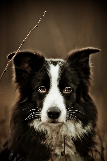 IMG_3119 by family_helle, via Flickr