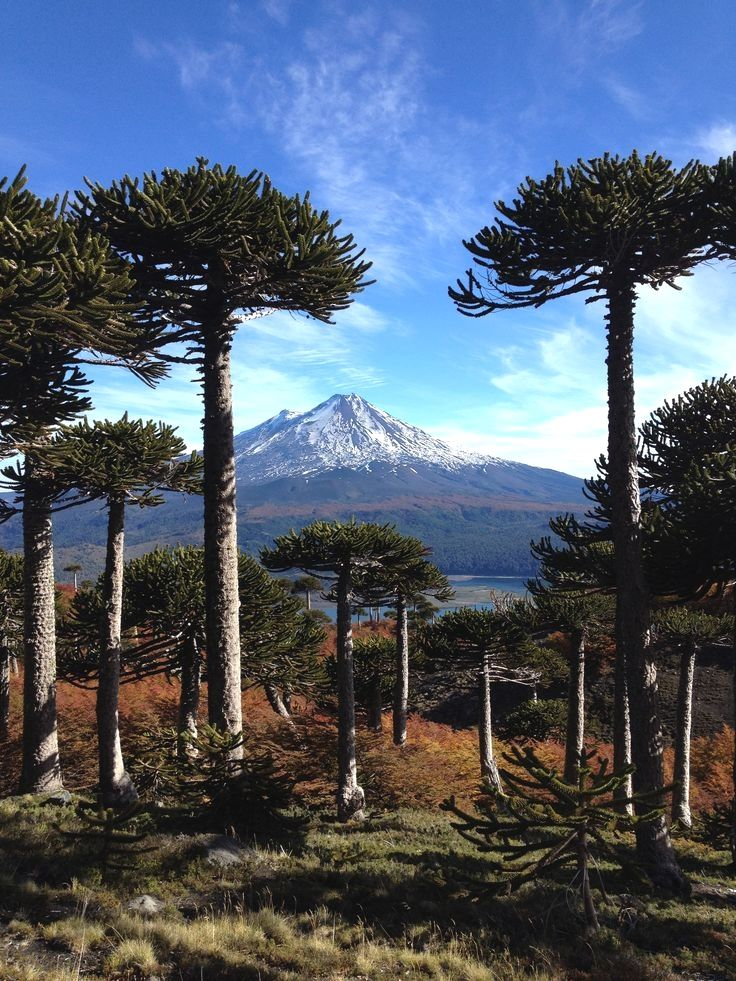 Conguillio National Park in Southern Chile in Autumn Chile ...