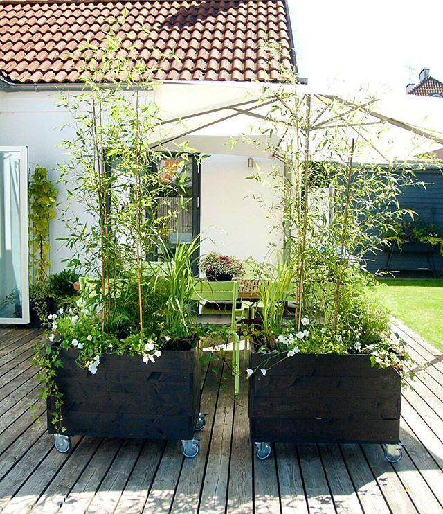 I somras gjorde vi vår uteplats lite grönare och mysigare med dessa hemsnickrade odlingslådor på hjul, och i vår vill jag tillföra ännu mer grönska! I bilden har jag taggat 7 konton som jag tycker har väldigt mysiga och inspirerande uteplatser- klicka så kommer namnen upp! Tar gärna emot tips på fler härliga uteplatskonton Last summer we made our patio more lush and cozy by building these two rolling planters- this spring I've decided to add even more greenery! In the picture I've tagged ...