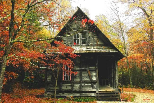 Country cabin, colorful leaves.. | Scenery/backgrounds ...
