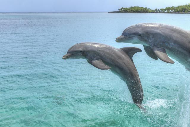 Dolphin information - learn about dolphins through 10 fascinating facts.