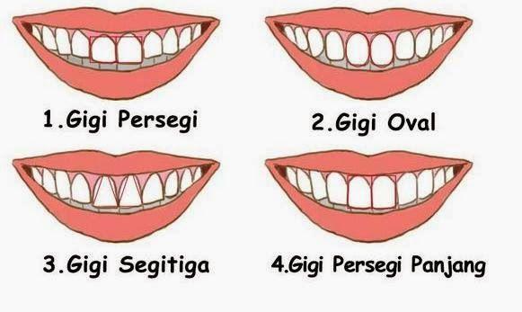 Arti 4 Bentuk Gigi Yang Menggambarkan Sifat dan Cara Membacanya