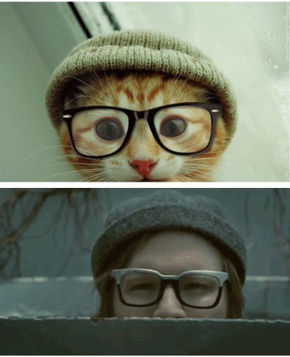 patrick stump and cats. what else could a girl ask for?