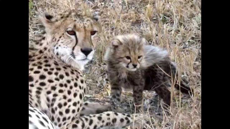 Südafrika Wild Life Farm