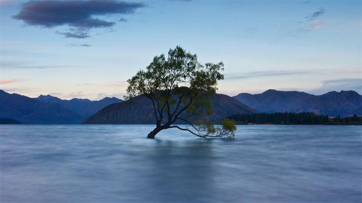 https://flic.kr/p/RjHtN4 | Lake Wanaka and Tree