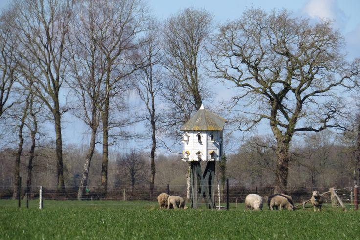 2015-04-05 Mooie duiventil nabij de Berkendijk bij Heino
