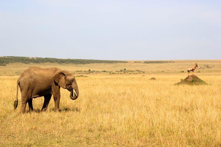 Masai Mara Kenya safari tips