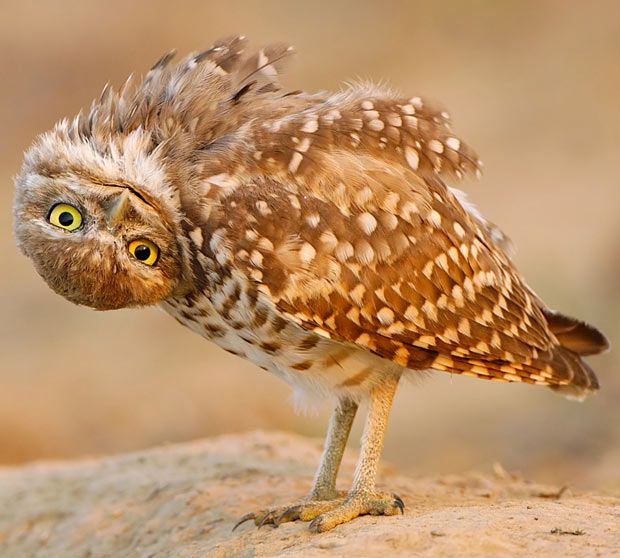 Image result for owl looking upside down