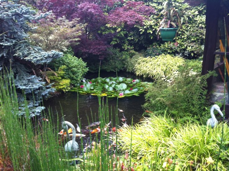 Lilies, a koi pond, Acers , pines - a Japanese garden paradise!