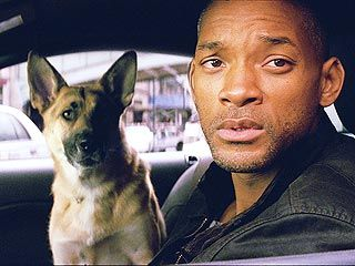 Abbey, the German Shepherd and Will Smith ( I am Legend)