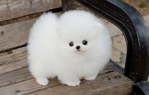 Vraag: Wie houdt er van puppy's? Antwoord: Jij. Correctie: Iedereen natuurlijk! Hoe kleiner hoe beter. En je weet dat het waar is! Omdat we weten dat je dol bent op puppy's hebben we voor jou een kleine hitparade samengesteld van schattigste puppy's die we op het internet konden terugvinden. Bekijk...